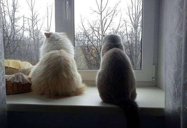 Кошки, ждущие хозяина, фото поведение кошки фотография