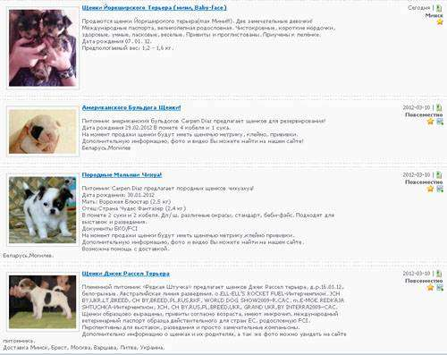 Купить щенка или собаку в Беларуси можно на Zoo.BY