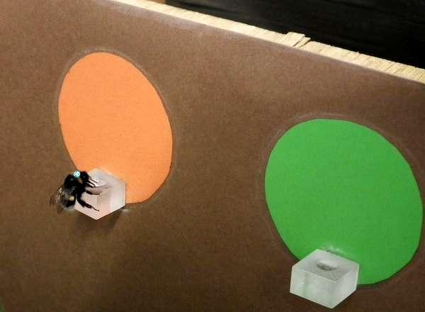 Шмель у кормушки, фото насекомые фотография