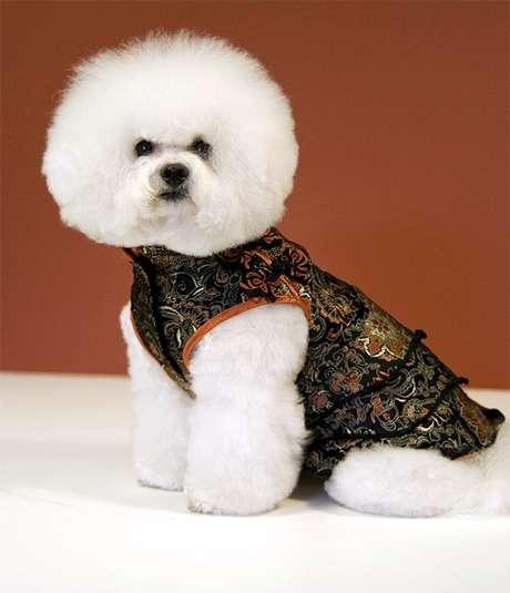 Бишон фризе, болонка, фото породы собаки фотография картинка