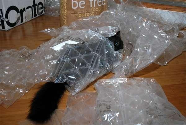 Кошка спрятавшаяся в пакете, фото фотография картинка