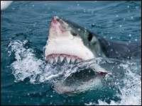 142 удивительных факта про акул