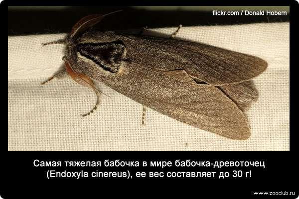 Факты о бабочках фото, любопытные факты о бабочка в ...