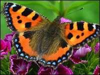 Интересные факты про бабочек