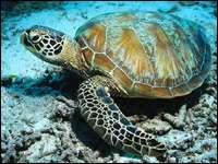 Факты о водных черепахах
