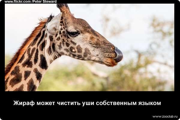 http://zooclub.ru/attach/21000/21233.jpg