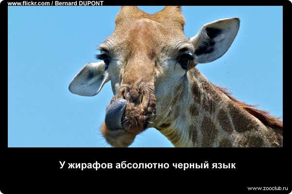 http://zooclub.ru/attach/21000/21234.jpg