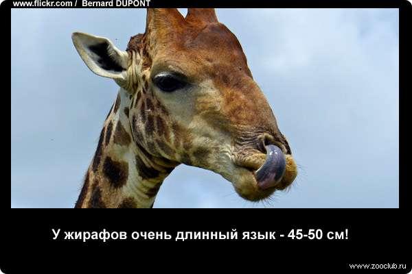 http://zooclub.ru/attach/21000/21235.jpg