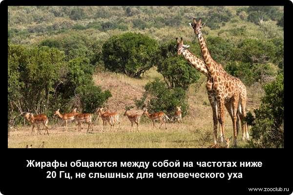 http://zooclub.ru/attach/21000/21239.jpg