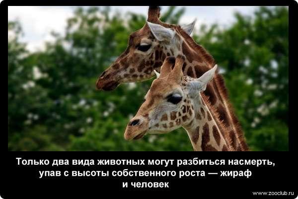 http://zooclub.ru/attach/21000/21240.jpg