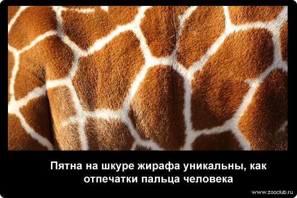 http://zooclub.ru/attach/21000/21241.jpg