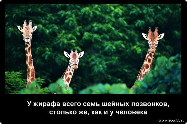 http://zooclub.ru/attach/21000/21242.jpg
