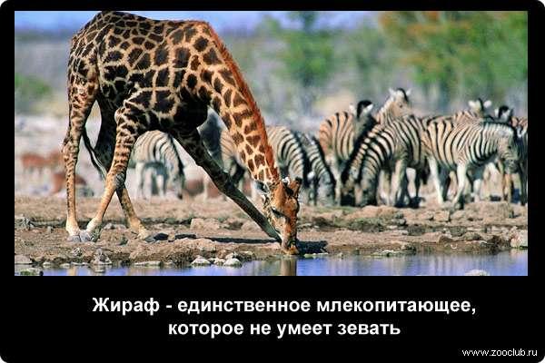 http://zooclub.ru/attach/21000/21243.jpg
