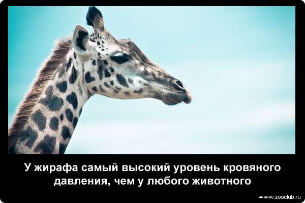 http://zooclub.ru/attach/21000/21244.jpg