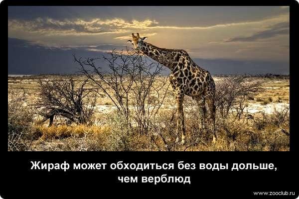 http://zooclub.ru/attach/21000/21245.jpg