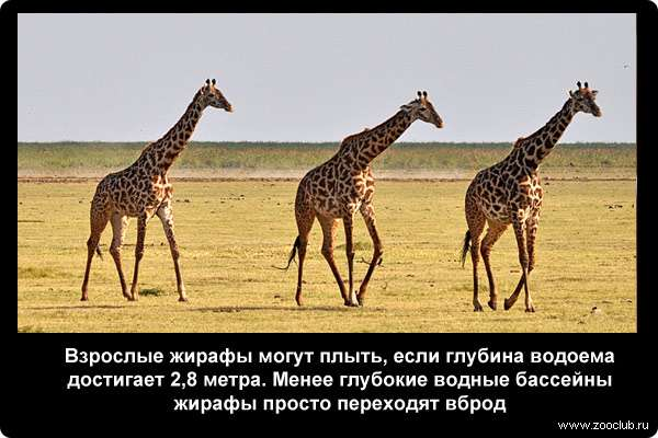http://zooclub.ru/attach/21000/21246.jpg