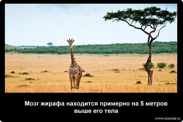 http://zooclub.ru/attach/21000/21248.jpg