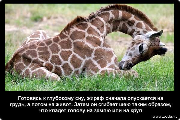 http://zooclub.ru/attach/21000/21249.jpg