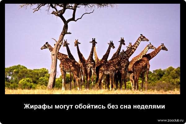http://zooclub.ru/attach/21000/21250.jpg