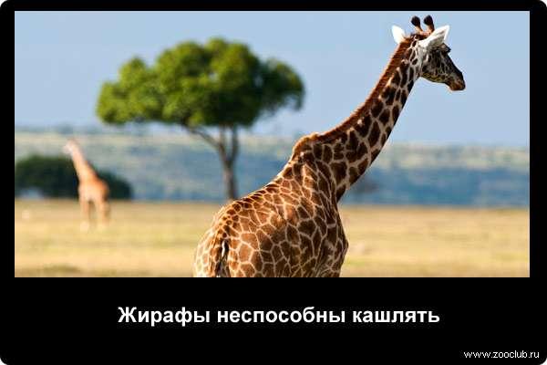 http://zooclub.ru/attach/21000/21251.jpg