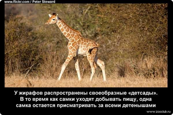 http://zooclub.ru/attach/21000/21252.jpg