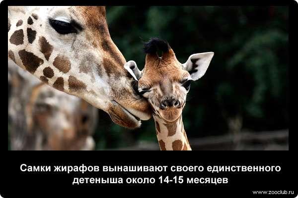 http://zooclub.ru/attach/21000/21253.jpg