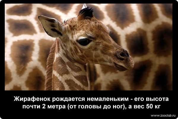 http://zooclub.ru/attach/21000/21254.jpg
