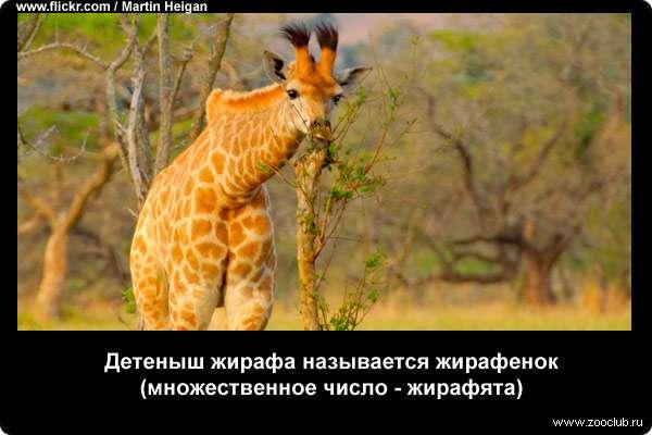 http://zooclub.ru/attach/21000/21255.jpg