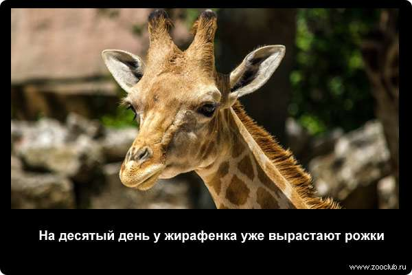 http://zooclub.ru/attach/21000/21256.jpg