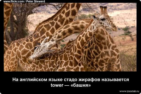 http://zooclub.ru/attach/21000/21258.jpg