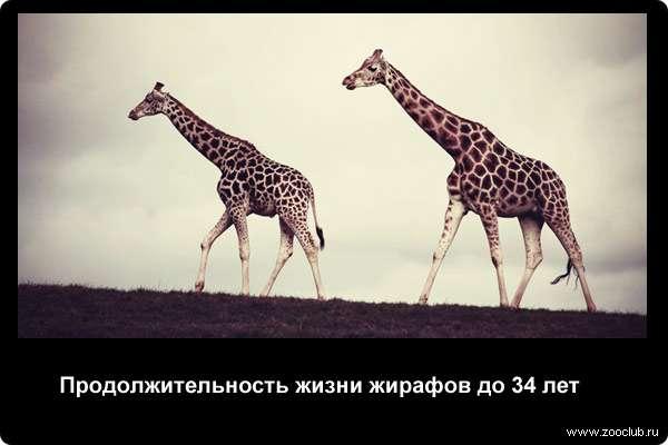 http://zooclub.ru/attach/21000/21259.jpg