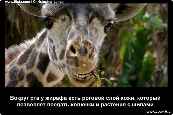 http://zooclub.ru/attach/21000/21260.jpg