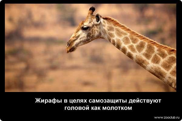 http://zooclub.ru/attach/21000/21261.jpg