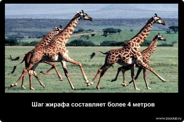 http://zooclub.ru/attach/21000/21264.jpg