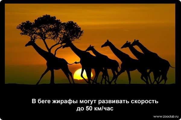 http://zooclub.ru/attach/21000/21267.jpg