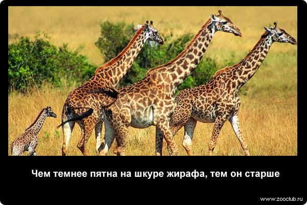 http://zooclub.ru/attach/21000/21273.jpg