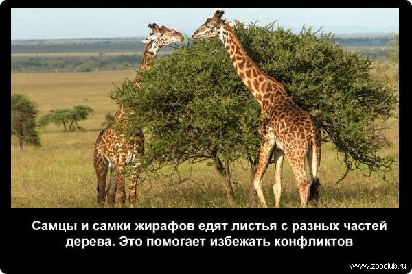 http://zooclub.ru/attach/21000/21274.jpg