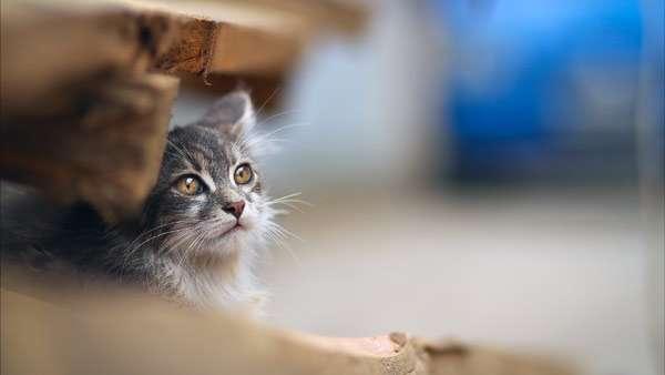 Прячущаяся кошка, фото фотография кошки