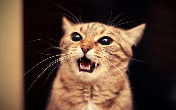 Испуганная кошка, фото фотография картинка
