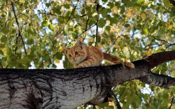 Кошка спускается с дерева, фото кошки фотография картинка