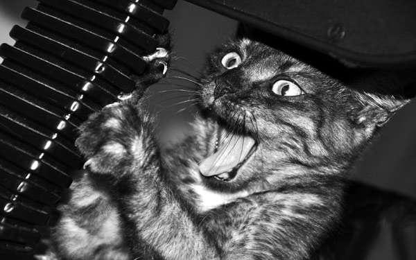 Испуганная кошка, черно-белая фото фотография