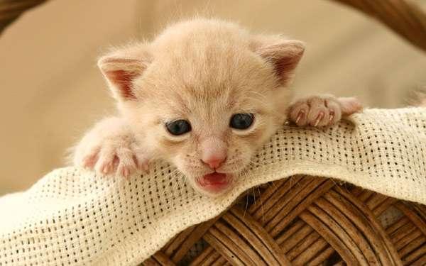 Что делать кот написал на диван как