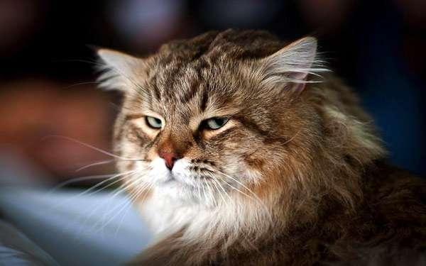 Домащний кот, фото новости о кошках фотография