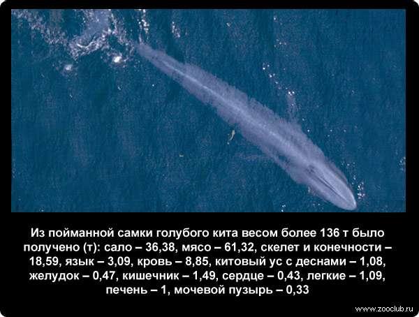 Интересные факты о китах | 454x600