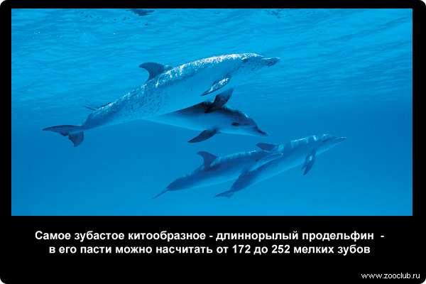 скачать игру про дельфинов - фото 5