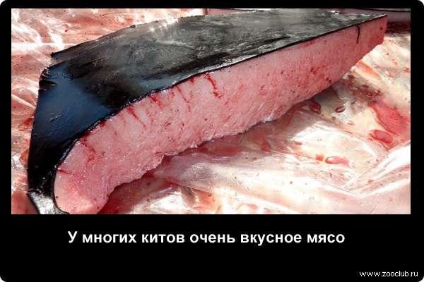 Редкие факты про жизнь китов фото занимательные факты о китах в  Факты о китах
