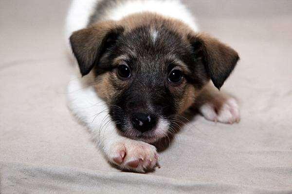 Щенок, фото болезни лечение собак фотография