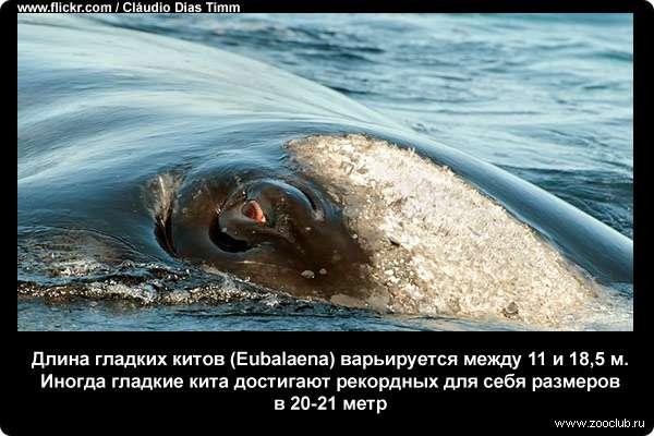 Завораживающие факты про китов фото факты про жизнь китов в  Интересные факты о китах