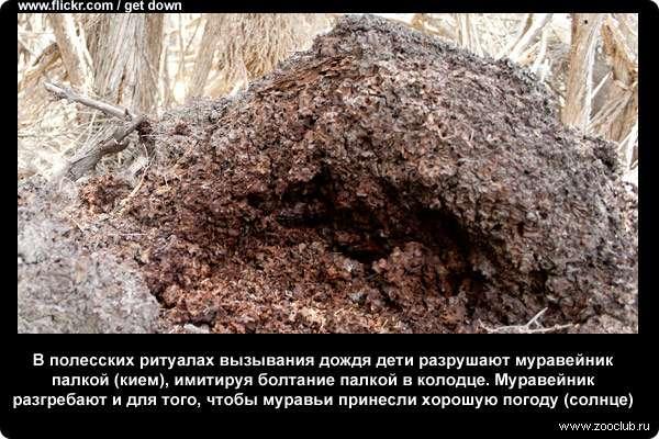 реферат про муравья