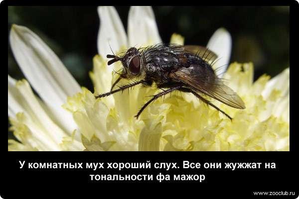 Все о мухах доклад 1604